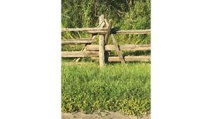 Cedar Split Fence posts and beams