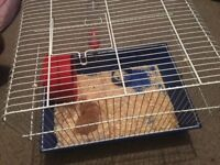 Syrian Hamster & Cage with water bottle, food bowl & wheel