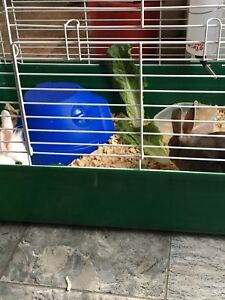 TWO RABBITS +CAGE