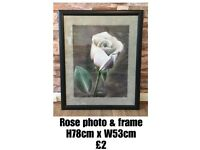 Rose Picture in Frame with Glass