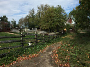 Barn, 5 box stalls, pastures and paddock for rent
