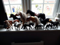 Lots of lovely ponies!
