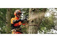 Highwood Tree Surgeons