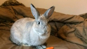 Rabbit in need of a new home
