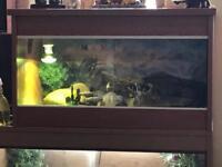 2 leopard geckos and setup **SOLD**