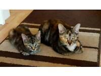 Female kittens