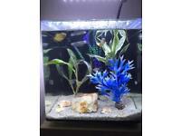 22ltr Aquarium (Aqua One 22)
