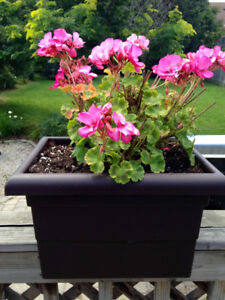 Over the rail planter with flowers