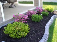 Grass Cutting Service & more - Servicing Brampton & Mississauga