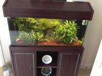 Fish Tank with display cabinet