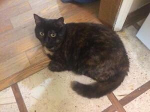 "Adult Female Cat - Tortoiseshell: ""Chloe"""