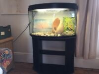 Bow front Aquarium fish tank on stand