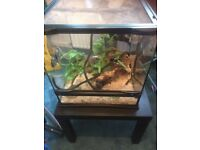 Selling male corn snake includes tank