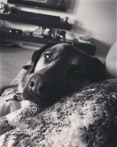 Looking for dog friendly home