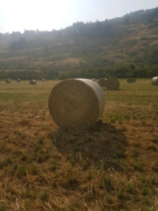 Feeder hay for sale will deliver