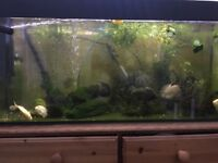Oscars for sale. Tiger and albino Also variety of tropical fish