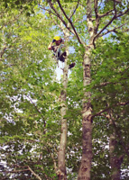 Tree Removal & Tree Pruning