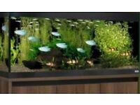 Flu val fish tank