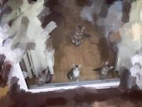 Cute Kittens ready to leave now