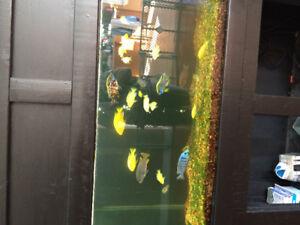 Aquarium stand and fish