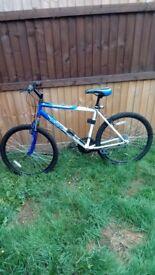 Apollo Xc26 mens bike