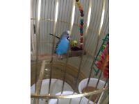 Birds and cage for sale!