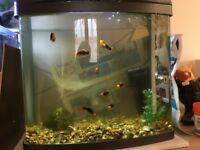 2 Small Aquariums complete with temperate fish - Free to a good home