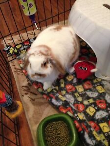 Free Rabbit and Cage to a good home