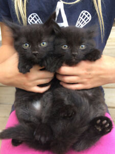 FREE - Lovable, playful, cuddly kittens