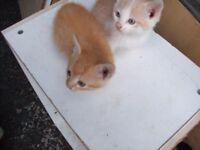 2 LOVELY KITTENS