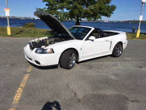 SVT Cobra Convertible,2004 Ford Mustang