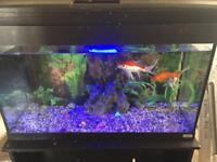 3ft fish tank (includes fish) with black cabinet for sale