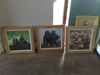 Set of 3 animal pictures