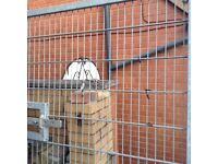 Iron gate very strong very well made good farm gate or yard gate