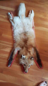 tapis peau de renard