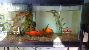 25 gallon aquarium w/ decorations, water filter pump, and stand