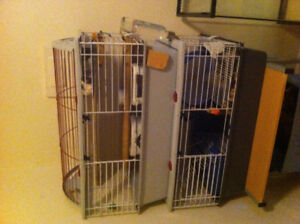 3 female rats(tailless,hooded&siamese) w/cage etc