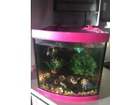 Fish tank with filter and light + 3 fish and food
