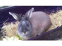 Peter. 3 yr old rabbit