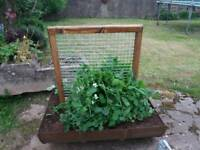 Little Farms. Wooden frame with steel trellis