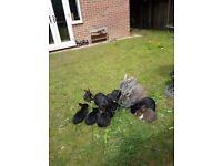 Adorable Baby rabbits for sale   colour Black
