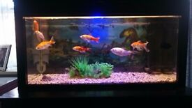 Fish tank,stand and fish