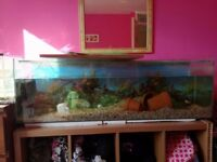 4 foot tank with set up for sale cheap