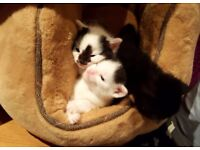 Kittens are ready for new home