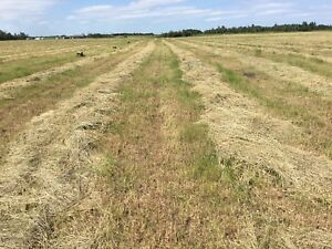 Small Square Bales (Grass/Timothy Brome mix - PREMIUM horse hay)
