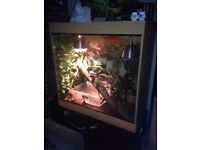 4ft by 4ft by 2ft Vivarium with Large Chinese Water Dragon