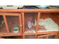 Two male rabbits with hutch