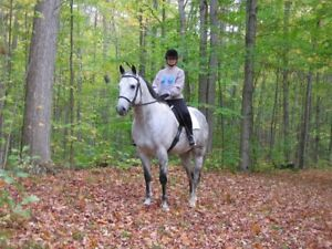 Looking to purchase or board horse