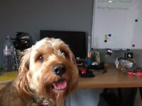 Cool Office Pal Required (Ideally Human) - Glasgow CC