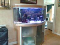 Good home wanted for my beautiful aquarium